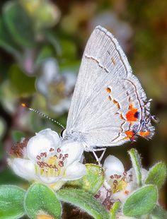 Backyard Butterfly