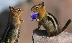 Wild Birds Unlimited: A chipmunks mating song