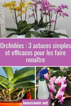 Belle Plante, Decoration Plante, Glass Vase, Cactus, Angel, Gardening, Architecture, Nature, House