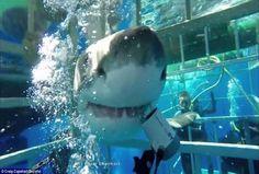 Σκηνές θρίλερ δίπλα από καρχαρία: Τρόμος για 4 δύτες! (Video)