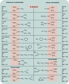 amino acid chart - Google Search | A exam images ...