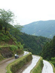 Tanada (terraced rice paddies along steep hills) in Kamikatsu, Tokushima, Japan