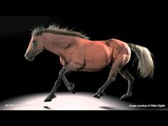 Wellington's Weta Digital and Massey University have worked together to generate horses capable of battling vampires.