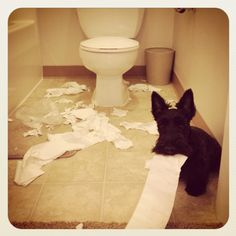 This reminds me of my boys. They pulled the paper from the bathroom into the bedroom (one long stream of paper, still attached to the roll mind you) and chewed it together at the end of the bed.