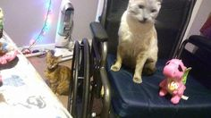 Pandora, Smokey, and their dragon named Darla wish everyone a happy and safe 4th of July!!! #cats #love #instagood #photooftheday #beautiful #cute #happy #fashion #followme #me #follow