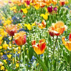 Image result for site:theorganicgardening.com Tulips, Blog, Pumpkin, Manga, Flowers, Plants, Outdoor, Inspiration, Front Doors