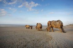 African artist Andries Botha created these giant elephant sculptures from pieces of driftwood surrounding a metal skeleton.