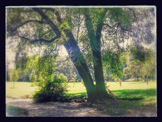 #Lambro #park
