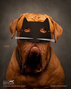 Dog wearing cat mask. Exclusive Interview: Photographer of the Wonderfully Witty Dog Portraits - My Modern Metropolis