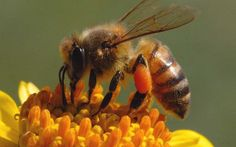 Sign up for our bee keeping class!