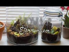 DIY - Closed Tropical Terrarium by far the best video I have seen, definitely going to make a few kinds for the apartment, wonder if there are kits sold locally. Terrarium Closed, Wall Terrarium, Terrarium Centerpiece, Terrarium Plants, Succulent Terrarium, Tropical Terrariums, Tropical Plants, Desert Plants, Self Sustaining Terrarium