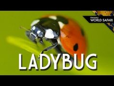 A collection of insect videos for kids that are perfect to include in an insects unit study. They include information on insect traits and specific insects. Lady Bug, Learning Activities, Kids Learning, Preschool Bug Theme, Science Videos For Kids, Butterfly Life Cycle, School Videos, Most Beautiful Animals, Bugs And Insects