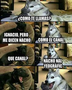 New Memes En Espanol Perros 55 Ideas Funny Shit, Funny Cute, Funny Jokes, Hilarious, Funny Stuff, Memes Humor, Humor Videos, Funny Images, Funny Pictures