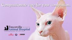 Compassionate care for your companion. | Tuscawilla Animal Hospital has veterinarians that care about cats and dogs too! Call us today to schedule an appointment. #veterinarymedicine #animalhospital Veterinary Medicine, Veterinarians, Schedule, Dog Cat, Cats, Timeline, Gatos, Veterinary Studies, Cat