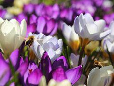 Signes Vals: Flere bier og blomster