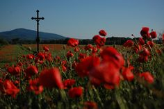Near Šahy | Flickr - Photo Sharing! A beautiful poppy-red meadow near Hungarian borders, South of Slovakia.