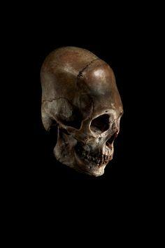 ryanmatthewcohn:  Elongated Skull. Ryan Matthew's Collection. Photo by Sergio Royzen.