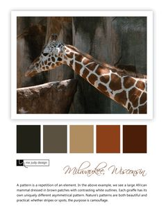 A giraffe's patterning is both beautiful and practical. Wildlife influence - Location: Milwaukee, Wisconsin  - mejudydesign.com Milwaukee Wisconsin, Patterns In Nature, Color Stories, Mammals, Giraffe, Wildlife, African, Stripes, My Style
