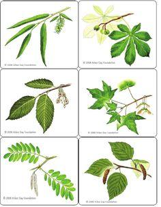 Trees To Plant, Plant Leaves, Science, School Resources, Montessori, Sustainability, Kindergarten, Preschool, Education