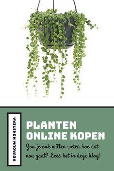 Zou je weleens willen weten hoe dat nou gaat? In de blog lees je over mijn ervaring! #planten #plants #kamerplanten #urbanjungle #plantenblog #plantblog #onlineplantenkopen Herbs, Urban, Plants, Blog, Ideas, Seeds, Herb, Blogging, Plant