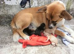 Check this out if you're having a bad day. This stray dog adopted these puppies.  Awww.....