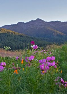 Wildflowers in Indian Valley, Plumas County. Photo by Heather Kingdon
