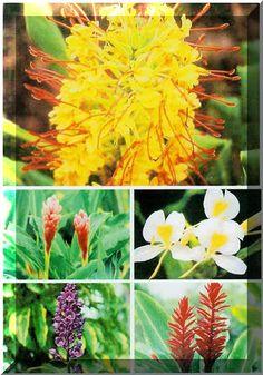 Native hawaiian plants to grow