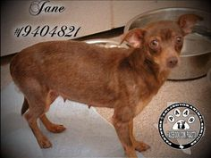 SOMEONE HAVE PITY FOR JANE! KILLED/EU TODAY/ MARCH 22/ FRIDAY* HEARTWORM+ 5 YRS OLD**ARLINGTON TEXAS    Arlington Animal Services, 1000 SE Green Oaks, Arlington, Texas 76018 Shelter hours: Weekdays (10-6), Saturdays (10-4).   Adoption Fee: $100 (Includes Sterilization, Core Vaccinations, Rabies, Worming, HW Test, Micro-Chip and 30 Days Pet Insurance)  AAS-Approved Rescue Groups with a 501c3 may rescue animals on the euthanasia list without cost. TO RESCUE, EMAIL…