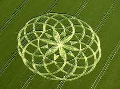 flordavida-cropcircle