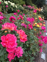Image result for pink outdoor spaces