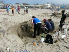 Begonia Festival & Sand Castle Begonia, Festivals, Castle, Events, Holidays, Santa Cruz, Holidays Events, Holiday, Castles