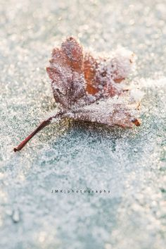 .The beauty of the First Frost!! #FIRSTFROST #GARDENSPELLS