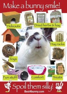 Minilop in general love stimulus. The more the merrier for some, you need to have lots of time for cuddles and play, if not your bunny will get bored. If you have a busy lifestyle or lack space for your bunny to move then a bunny may not be for you. Bunny Cages, Rabbit Cages, Rabbit Toys, Pet Rabbit, Lionhead Rabbit, Pet Bunny Rabbits, Baby Bunnies, Rabbit Life, House Rabbit