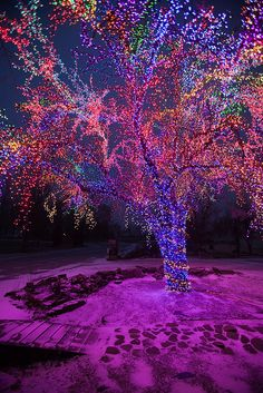 The Magic Tree on Christmas Morning1 ~  Columbia ~ Boone County Missouri.©Notley Hawkins - USA