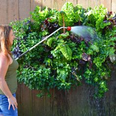 Living walls are beautiful, practical and environmentally friendly. Let author Shawna Coronado show you how to plant your own vertical garden.