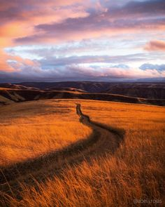 At sunset the grass turns to fire and the road looks more like adventure. Milton-Freewater Oregon. [OC] [3480x4350] - Posted by: walkingaswind
