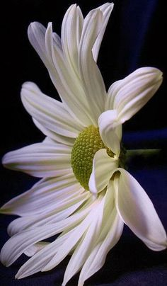 Placer Blog: Simply Daisy