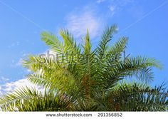 Palm leaf over blue sky