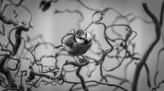 #canon7d #photography #bird #bluetit #curvytwigs #blackandwhite