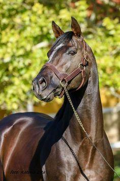 Thoroughbred, Beautiful Horses, Animals, Art, Pretty Horses, Art Background, Animales, Animaux, Kunst