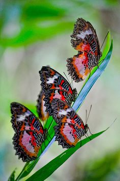 beautiful birds, butterflies and flowers Beautiful Bugs, Beautiful Butterflies, Beautiful World, Beautiful Things, Butterfly Kisses, Butterfly Flowers, Butterfly Family, Flying Flowers, Butterfly Wings