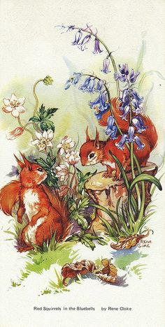Red Squirrels In The bluebells