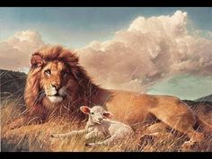 A lion and a lamb laying together in the field as the wind blows all around them just goes to show there can be PEACE ON EARTH. A wonderful animal print by Nancy Glazier. Arte Lds, Lion And Lamb, Lion Painting, Le Roi Lion, Like A Lion, Prophetic Art, Lion Of Judah, Kingdom Of Heaven, Poster Prints
