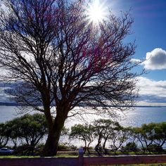 Eastern Beach Geelong Australia.  Carole Walker's Photos. #sonyalpha #sonycamera #sony #sonyphotography #sonyimages #amateur #amazing #amateurphotos #amateurphotography #amateurphotographer #localphotography #localphotographer #nature #naturelover #geelong #geelongphotographer #victoria #australiagram #australia #trees #skyline #sky #cloudporn #cloud #wow by carolewalkersphotos http://ift.tt/1JtS0vo