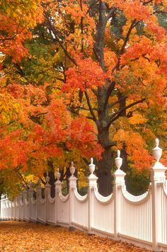 A pretty white fence surrounded by colorful Fall foliage in Bennington, Vermont. Le Vermont, Bennington Vermont, Autumn Scenes, Fence Landscaping, Seasons Of The Year, Fall Pictures, Garden Fencing, Belle Photo, Mother Nature