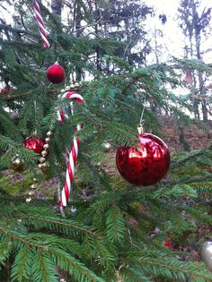 Christmas decoration in the forest