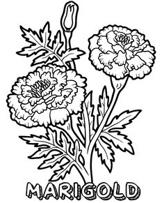 Flowers coloring pages Marigold coloring page Magic-Coloring Easy Coloring Pages, Flower Coloring Pages, Coloring Books, Marigold Flower, My Flower, Beautiful Flower Drawings, Beautiful Flowers, Free Printable Coloring Sheets, Activity Sheets For Kids