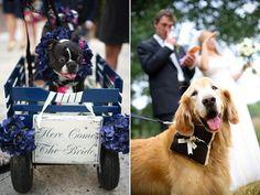 cute pets at wedding