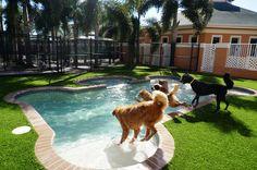 Check out our latest installation at Cesar Millan's Dog Psychology Center in Florida. www.easyturf.com l dog grass l dog whisperer l pet friendly l outdoor living