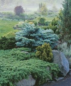 image tex-oregongarden.com    As with all garden design, form, color and texture always come into play.     Conifer Gardens areno ...
